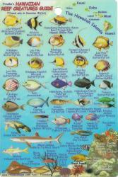 Buy map Hawaiian Islands, Reef Creatures Fish ID Mini Card by Frankos Maps Ltd.