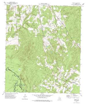 Forest topo map